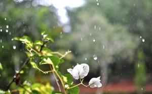 flower-180869_640