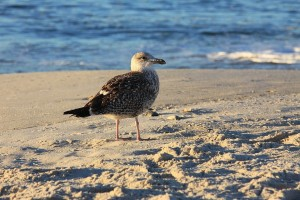 seagull-2871_960_720
