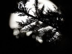 moon-1600641_960_720