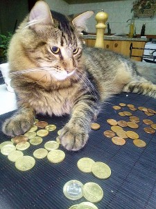 Cat__counting__money
